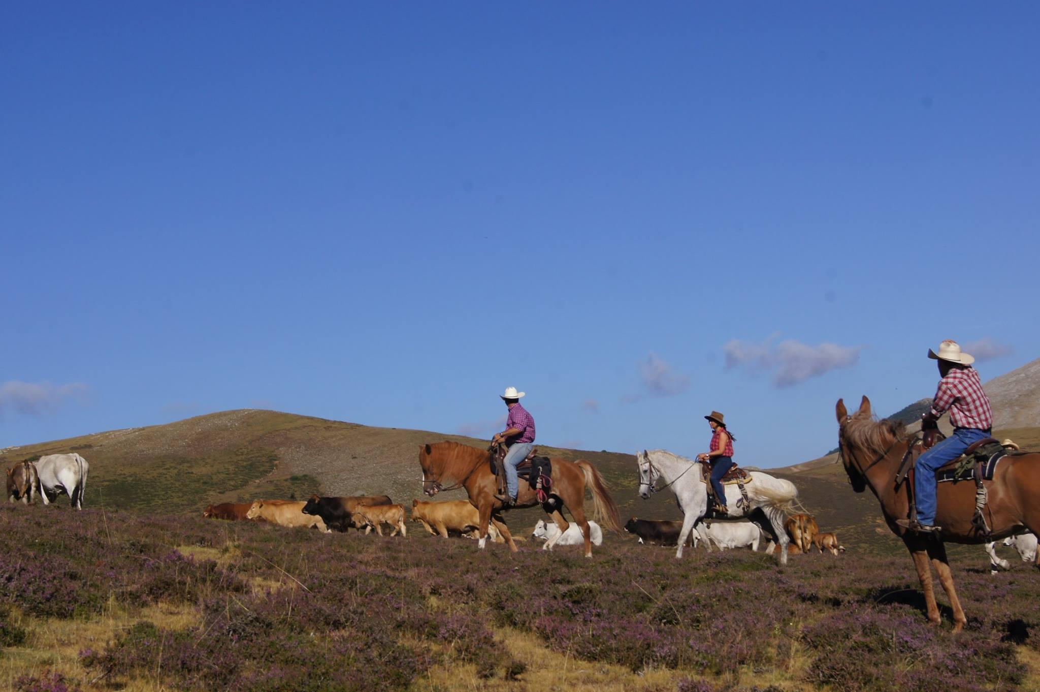¡¡¡TRASHUMANCIA !!! del 2 al 8 de junio Una fantástica aventura en la que acompañaremos una manada de más de 120 cabezas de ganado a través de fabulosos paisajes en la confluencia de Burgos, Soria y La Rioja.