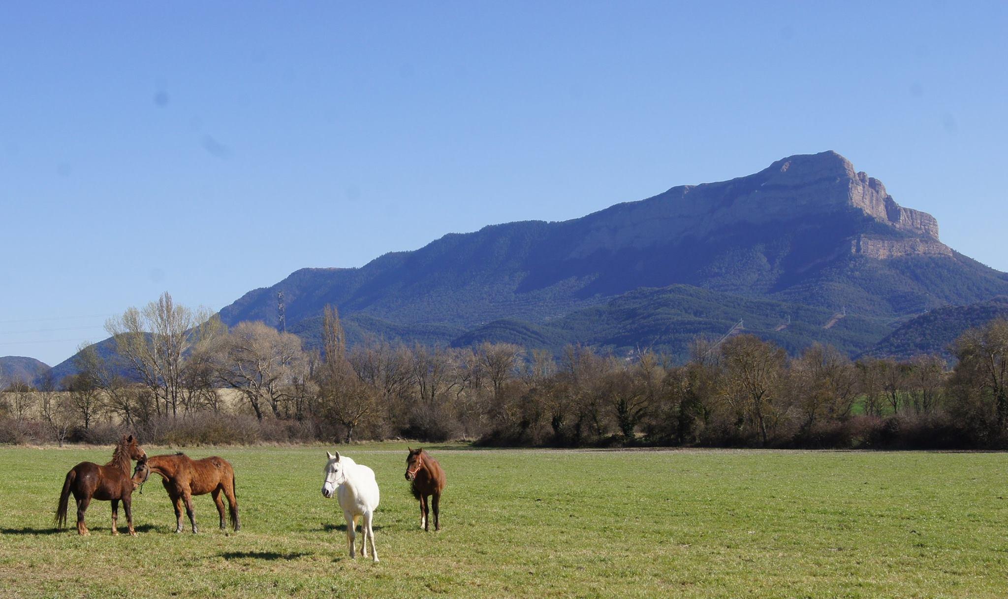 Ya es primavera en Jaca y Pirineos