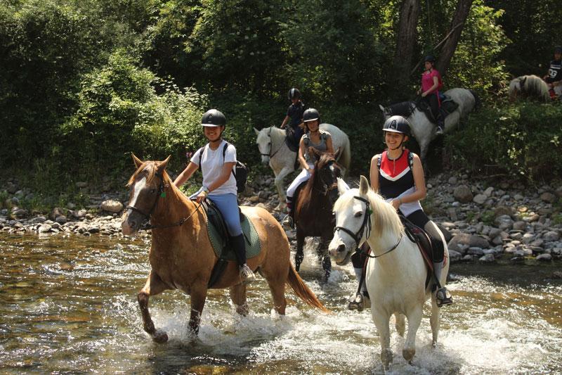 campamentos de caballos pirineo ecuestre